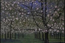 Bloesem Wijk bij Duurstede, olieverf 70 x 90 cm, particulier bezit