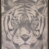 Tijger, olieverf 60 x 80 cm, € 419,-